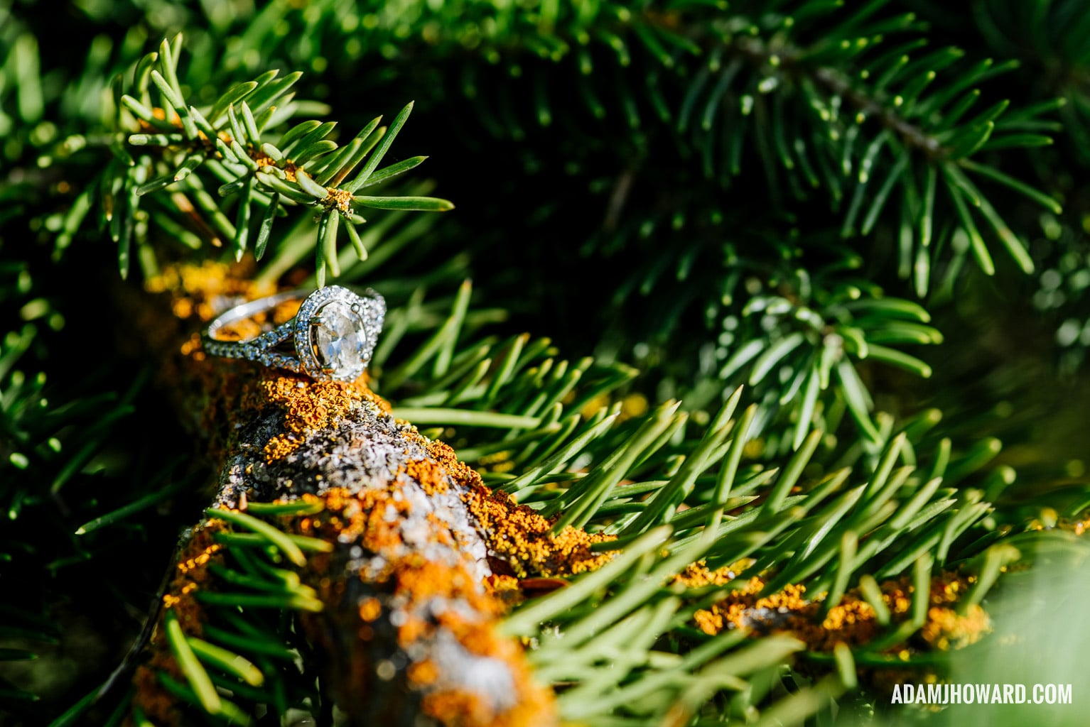 Macro Photography of an Engagement Ring in a Tree in the Mountains